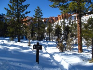 Bryce Snow Trail (Large)