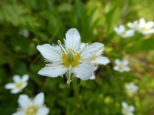 rare white flower