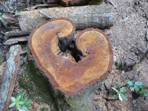 Heart Shaped Wood