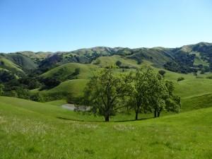 Sunol Bucolic Hillside